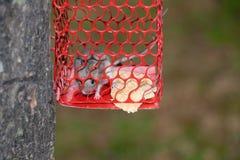 Rata en jaula foto de archivo libre de regalías