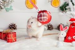 Rata linda decorativa en un fondo de las decoraciones de la Navidad Fotos de archivo libres de regalías