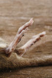 Rata muerta Imagenes de archivo