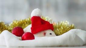 Rata nacional blanca con los juguetes de la Navidad metrajes
