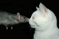 Rata y gato Imagenes de archivo
