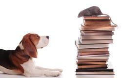 Rata y perrito Imágenes de archivo libres de regalías
