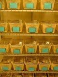 Ratas del laboratorio Imagen de archivo libre de regalías