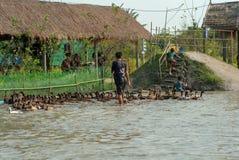 Ratchaburi,泰国:1月20,2019 -孩子在有泥的池塘享受奔跑追逐的小组鸭子在农场 库存图片