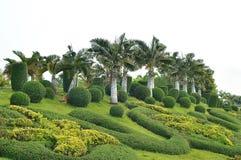 Ratchaphruek garden Royalty Free Stock Images