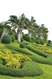 Ratchaphruek garden Royalty Free Stock Photos