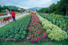 Ratchaphruek-Garten am 18. Dezember 2015: Lizenzfreie Stockfotos