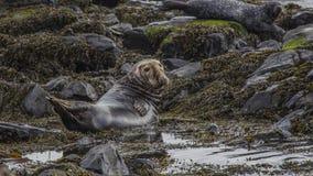 Rathlin-Insel Nordirland Stockfoto