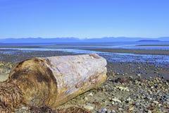 Rathtrevor Wyrzucać na brzeg prowincjonału parka podczas niskiego przypływu w Vancouver Jest zdjęcie stock