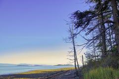Rathtrevor Wyrzucać na brzeg prowincjonału parka podczas niskiego przypływu w Vancouver Jest obraz royalty free