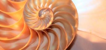Ratio de oro del crecimiento espiral seccionado transversalmente de la estructura de la simetría de Fibonacci de la cáscara del n foto de archivo libre de regalías