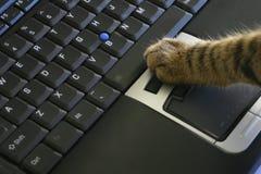 Ratón de la computadora portátil del tecleo del gato Fotografía de archivo libre de regalías