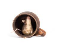 Ratón hambriento en una taza vacía Foto de archivo