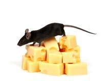 Ratón y queso Imágenes de archivo libres de regalías