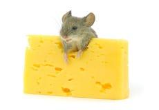 Ratón y queso Imagen de archivo libre de regalías