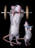 Rato Bodybuillders imagem de stock royalty free
