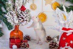 Rato bonito decorativo em um fundo de decorações do Natal Fotografia de Stock