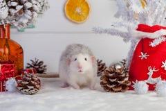 Rato bonito decorativo em um fundo de decorações do Natal Imagens de Stock