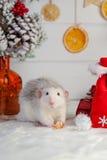 Rato bonito decorativo em um fundo de decorações do Natal Fotografia de Stock Royalty Free