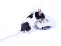 Rato chamada Fotos de Stock Royalty Free