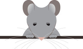 Rato de bolso Foto de Stock Royalty Free