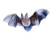 Rato de voo Dia das Bruxas Isolado Ilustração da aguarela ilustração royalty free