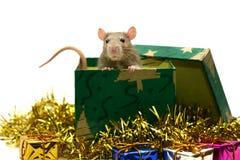 Rato do bebê com decorações do Natal fotos de stock