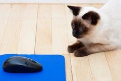 Rato do gato e do computador no assoalho Fotografia de Stock Royalty Free