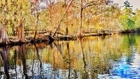 Rato do rio Foto de Stock Royalty Free