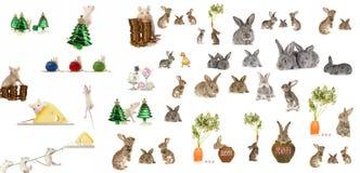 Rato e coelho cinzento Imagem de Stock Royalty Free