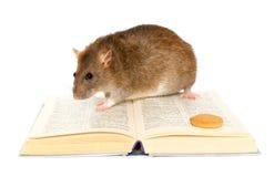 Rato e livro Imagens de Stock Royalty Free