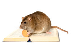 Rato e o livro Fotos de Stock