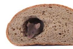Rato e sua casa Imagens de Stock