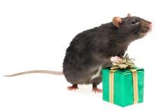 Rato e um presente Fotografia de Stock Royalty Free