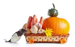 Rato e vegetais Foto de Stock Royalty Free