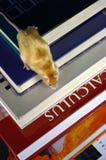 Rato em livros Foto de Stock Royalty Free