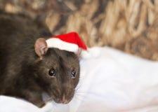 Rato escuro no chapéu do Natal no fundo branco imagens de stock royalty free