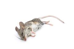 Rato inoperante imagem de stock