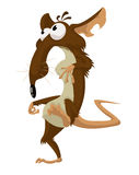 Rato louco Foto de Stock