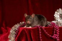 Rato no fundo vermelho de veludo fotografia de stock