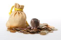 Rato pequeno Fotografia de Stock Royalty Free