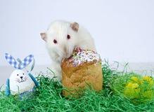 Rato pequeno bonito Fotografia de Stock