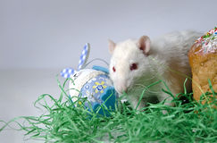 Rato pequeno bonito Imagem de Stock
