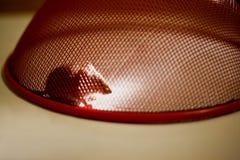 Rato prendido em casa Fotos de Stock