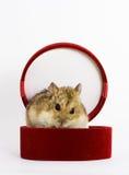 Rato-presente Foto de Stock Royalty Free