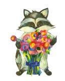 Raton laveur avec le bouquet Photos libres de droits
