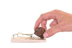 Ratonera con el chocolate Imágenes de archivo libres de regalías