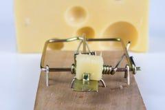Ratonera en una tabla blanca Trampa con queso amarillo como cebo foto de archivo