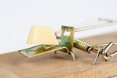Ratonera en una tabla blanca Trampa con queso amarillo como cebo imagen de archivo libre de regalías