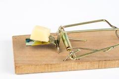 Ratonera en una tabla blanca Trampa con queso amarillo como cebo imágenes de archivo libres de regalías